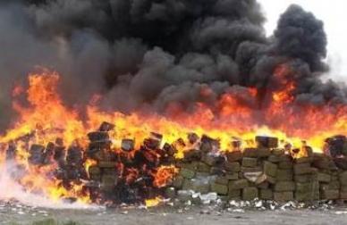 Destruye Policía Federal mariguana y amapola en Guerrero y Michoacán