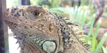 Animales asegurados por Profepa continúan en Zoológico de Chilpancingo 3