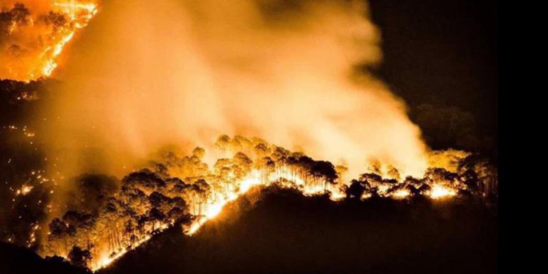 Incendios forestales causan 65.82% más daños que en 2015