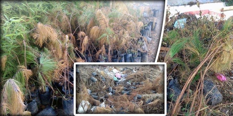 Tira Ayuntamiento 500 árboles a la basura en Chilpancingo