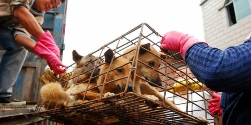 Morelos: regresan 170 perros confiscados a activista