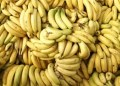 Plátanos apunto de extinguirse por plaga mundial: expertos 12