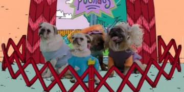 """""""Pugrats"""" perros pug que recrean serie de los """"Rugrats"""" 13"""