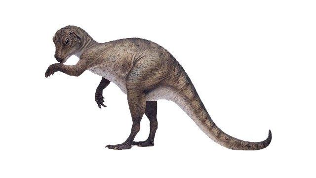 ¿Qué especies de dinosaurios habitaron en México? 15