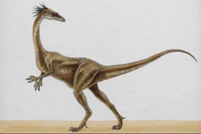 ¿Qué especies de dinosaurios habitaron en México? 9