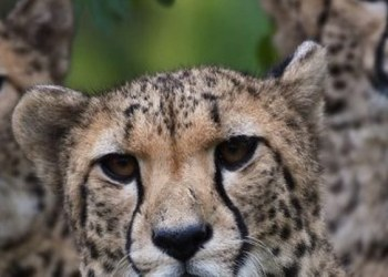 La Tierra perdió el 60% de sus animales salvajes en 44 años 1