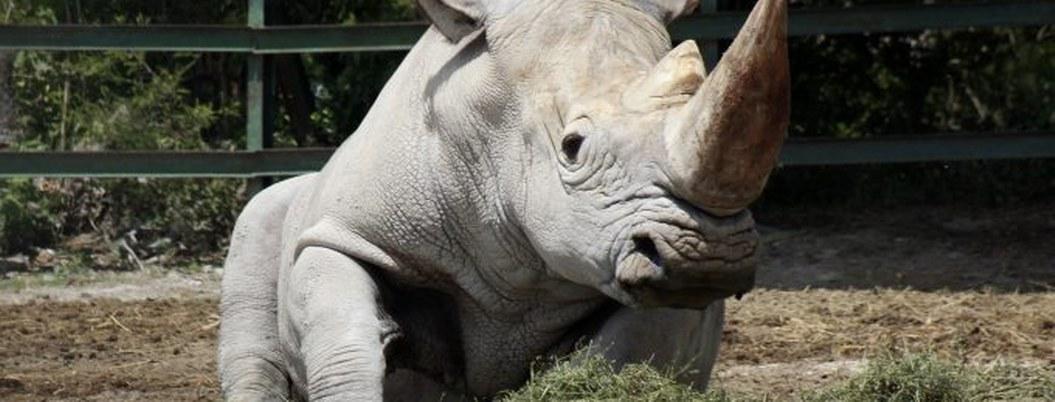 Humanidad acabó con 60% de los animales del planeta en solo 40 años
