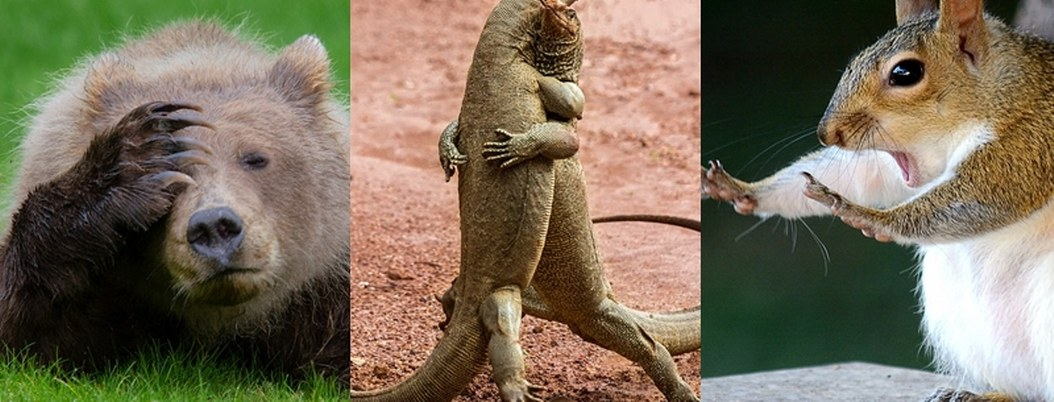 Estas son las fotos más chistosas del mundo animal