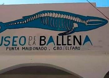INAH inaugura museo de la ballena con primer fósil hallado en Guerrero 1