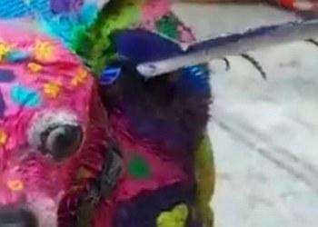 Pinta su perro de alebrije y la acusan de maltrato animal| VIDEO 3