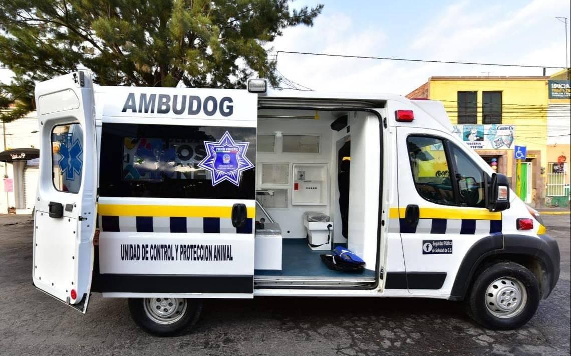 'Ambudog' la primera ambulancia canina en México