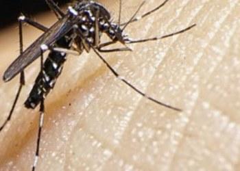 Desarrollan nuevo repelente de moscos que proviene de bacterias 1
