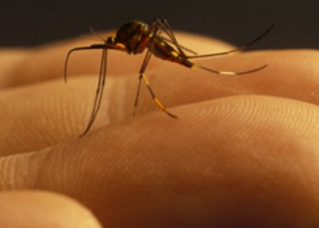Con este truco mantendrás a los mosquitos fuera de tu casa 1