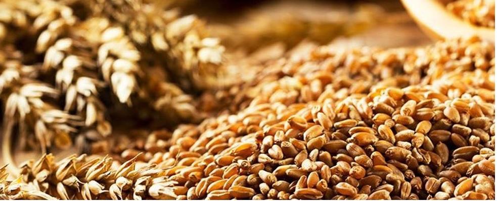 UNAM desarrolla suplementos nutricionales a bajo costo