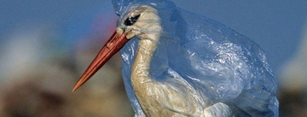 Cada año mueren un millón de aves a causa del plástico