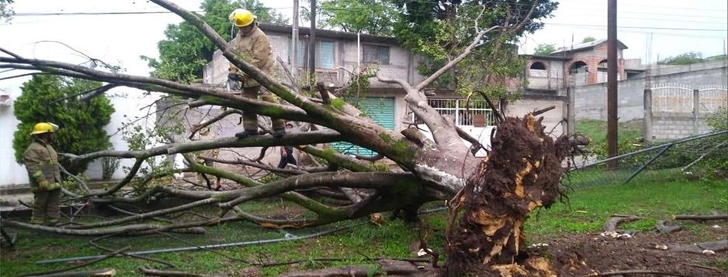 Lluvias derriban 30 árboles y 10 techos de casas en Huatulco