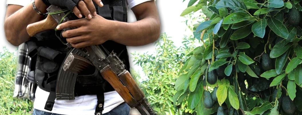 Extorsionadores se ensañan con aguacateros; les piden 100 mil pesos
