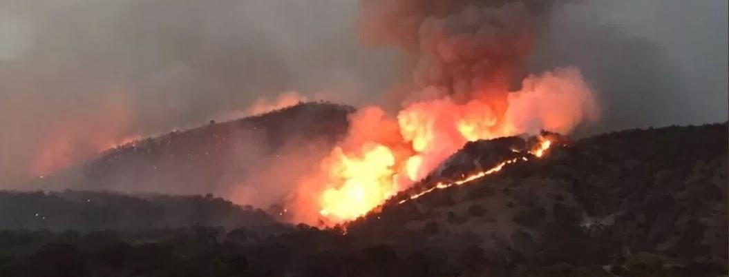 Incendios devoraron 484 mil hectáreas en México