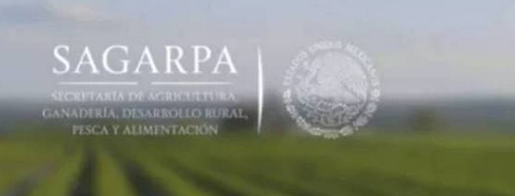 Detectan millonario fraude en la Sagarpa