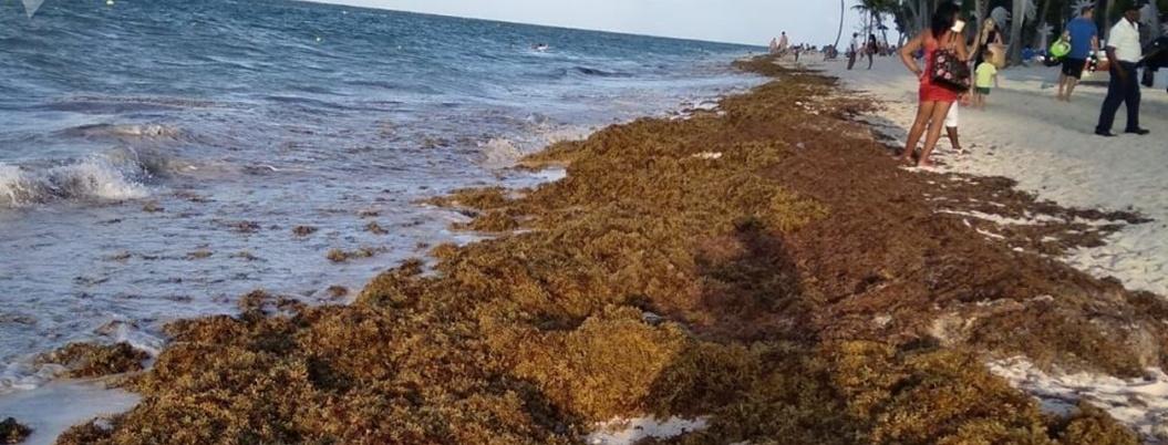 Sargazo provocará contingencia en Quintana Roo