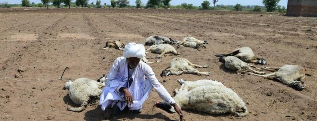 Ola de calor en la India mata a 49 personas