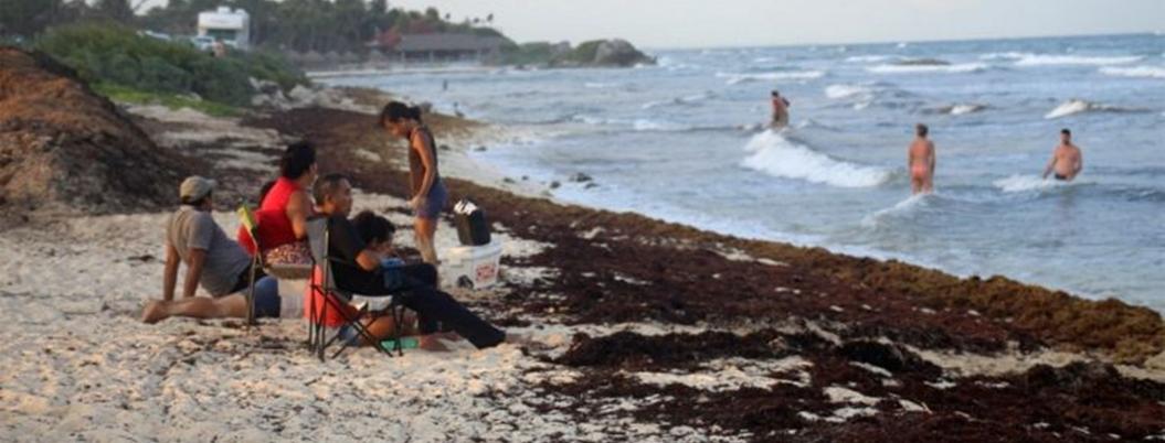 Sargazo durará una semana más en Quintana Roo