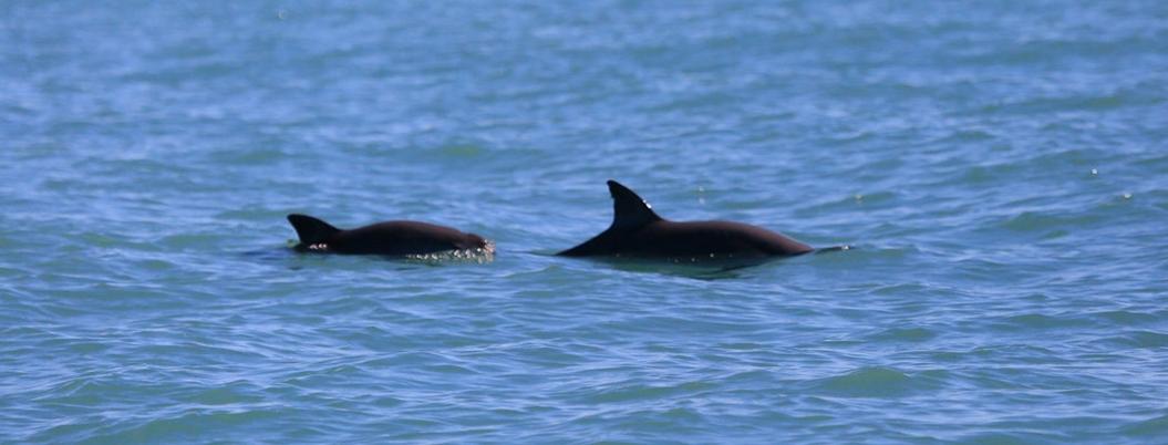 Hábitat de vaquita marina, en Lista de Patrimonio Mundial en Peligro