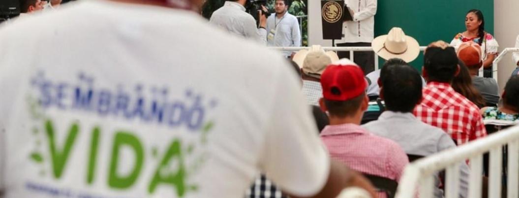 Abren contrataciones para trabajar en programa Sembrando Vida en Guerrero