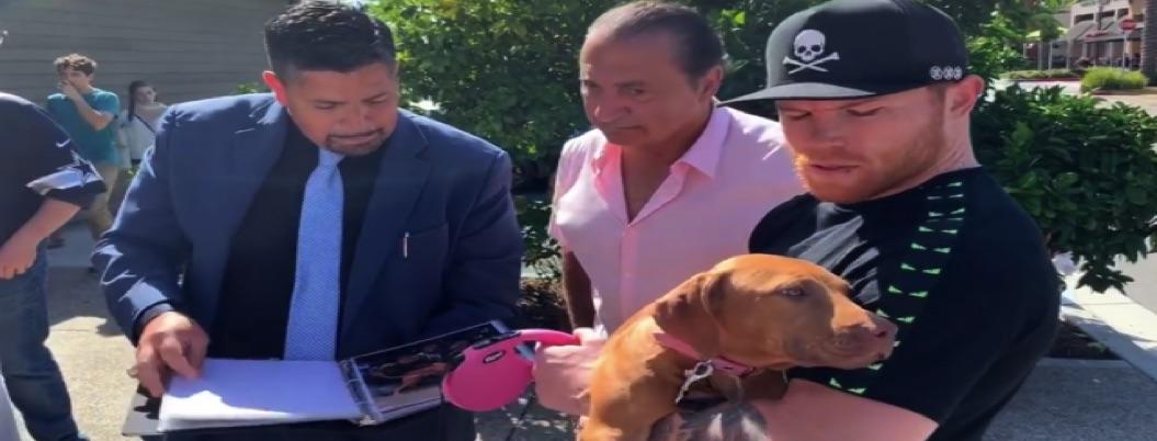 Regalan a Canelo un perro que cuesta 150 mil dólares