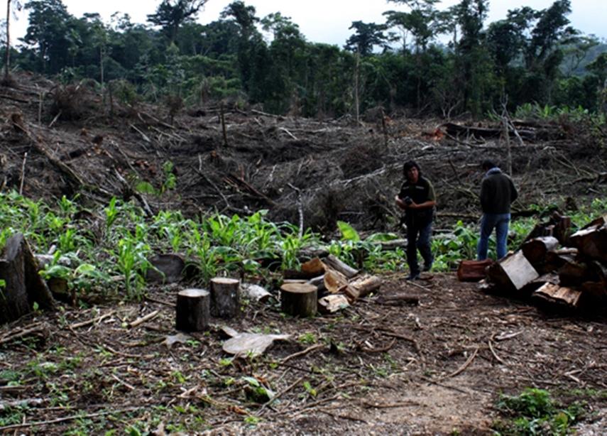 Selva Lacandona, el paraíso que depredan los mexicanos 2