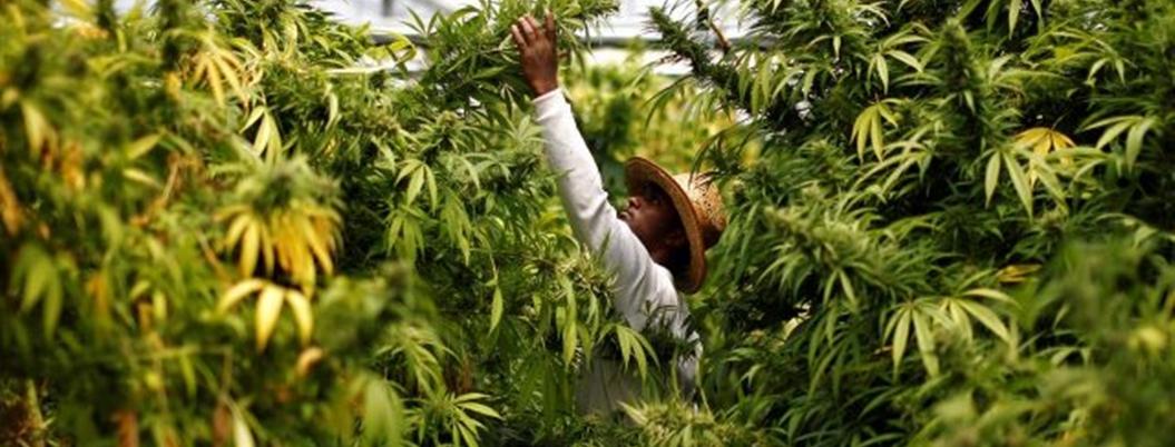 Impuesto de la marihuana beneficiaría a México, señalan