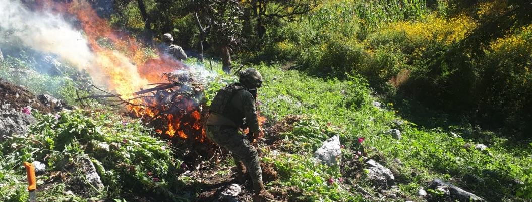 Ejército destruye 30 plantíos de enervantes en Guerrero en 18 días