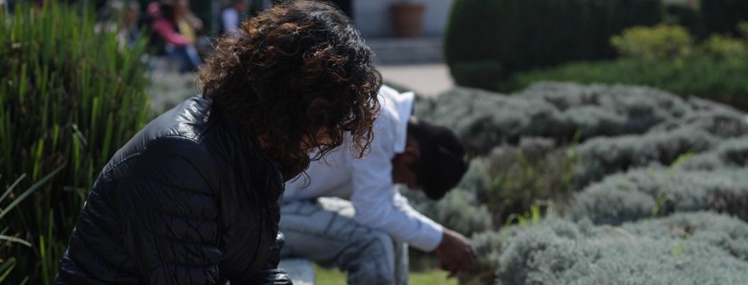 Padece depresión el 25% de los adultos en México