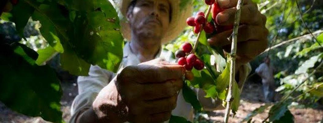 México busca mejorar precios del café con la iniciativa Mesocafé 4