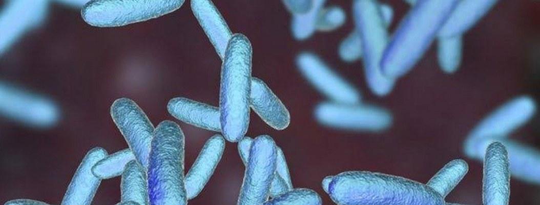 Identifican bacteria intestinal que retrasaría el Parkinson