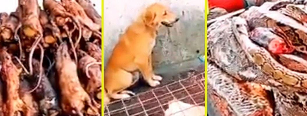 Perros, serpientes y ratas, animales que oferta un mercado asiático