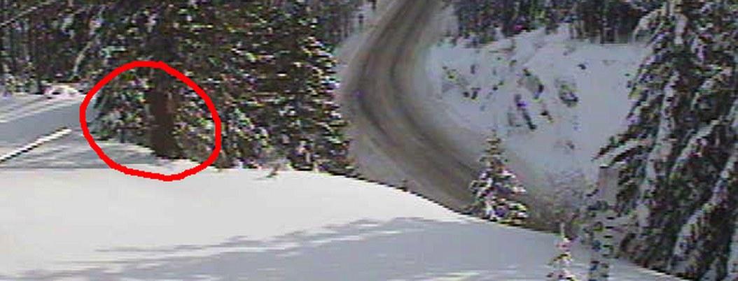 Captan a extraño ser entre la nieve; aseguran que es pie grande