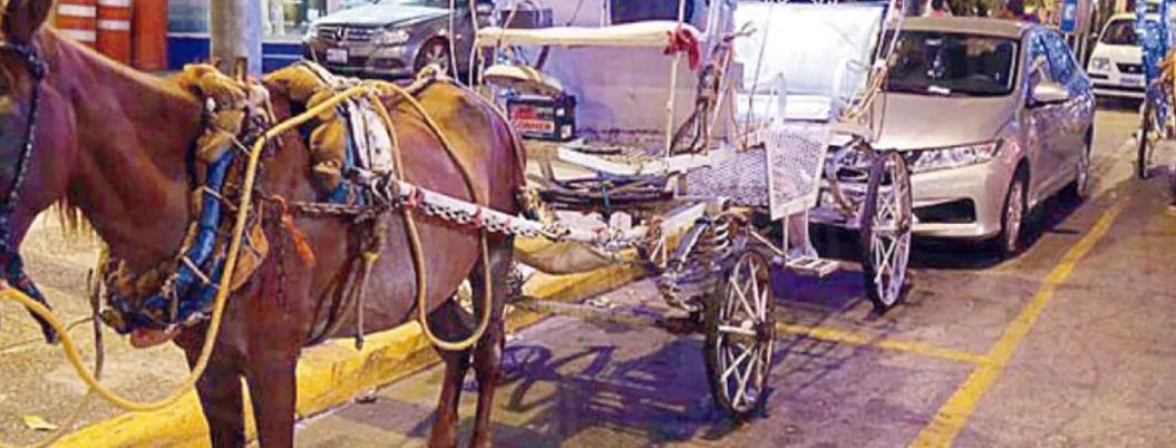 Firman retiro de caballos 24 de 57 concesionarios de calandrias