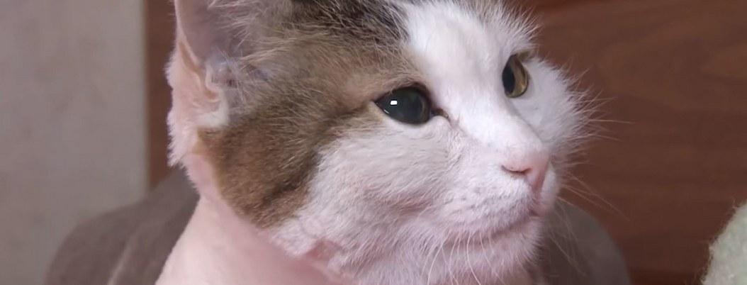 Gato salva a su dueña de morir calcinada en incendio