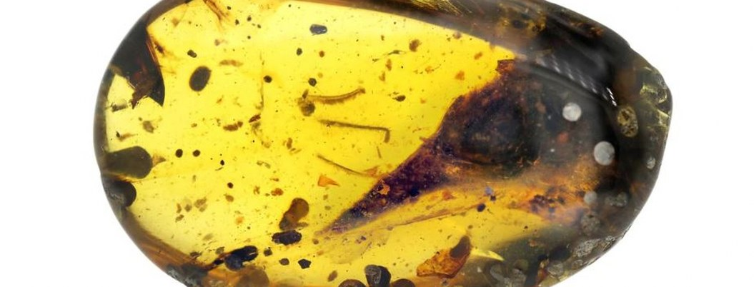 Hallan dinosaurio carnívoro más pequeño conservado en ámbar
