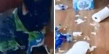 Guardaba papel para cuarentena; su perrito lo destruye 8