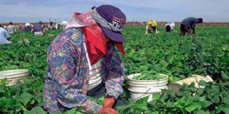Jornaleros agrícolas Canadá
