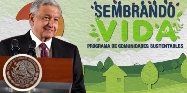 Sembrando vida, programa electorero de AMLO, en la opacidad y corrupción: diputados 1