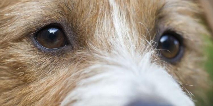 ¡Consiente al mejor amigo! el 21 de julio se celebra el Día Mundial del Perro 1