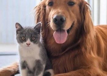 ¡Firulais lo sabe! estudio revela que los perros distinguen cuando los humanos mienten 6