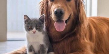 ¡Firulais lo sabe! estudio revela que los perros distinguen cuando los humanos mienten 8