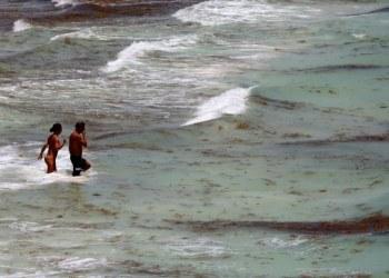Comienza la llegada masiva de sargazo a las costas de Quintana Roo 6