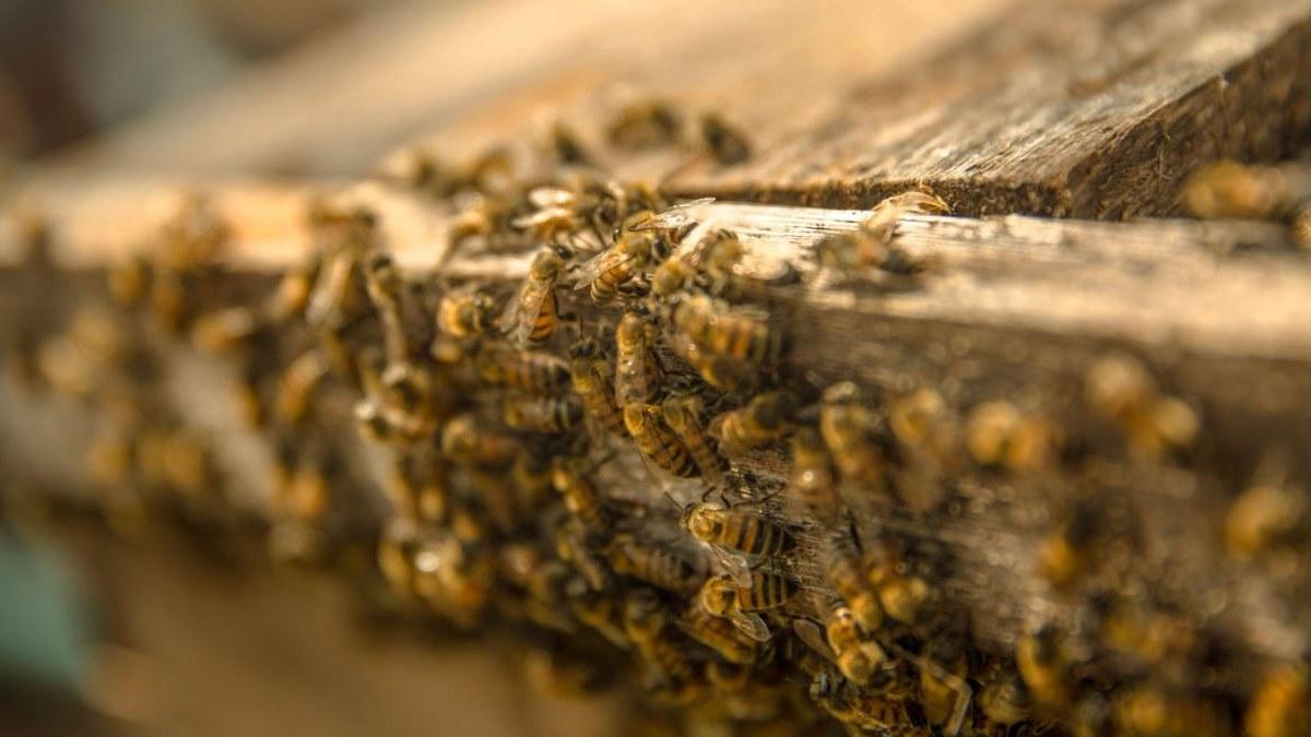 México, octavo lugar mundial en producción de miel; prevén aumento del 22.4% 3