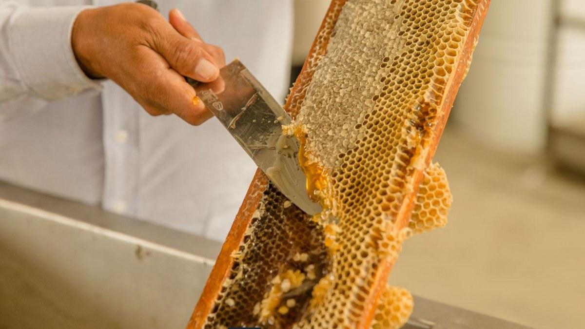 México, octavo lugar mundial en producción de miel; prevén aumento del 22.4% 1