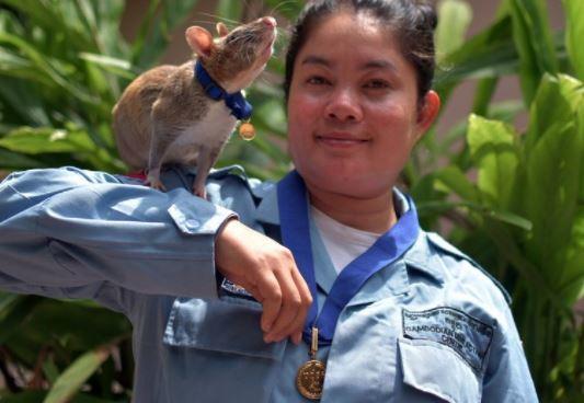 Jubilan a Magawa, rata que olfateaba minas y otros explosivos 1